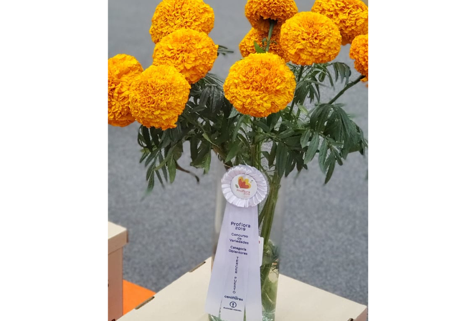 Marigold 3rd place others