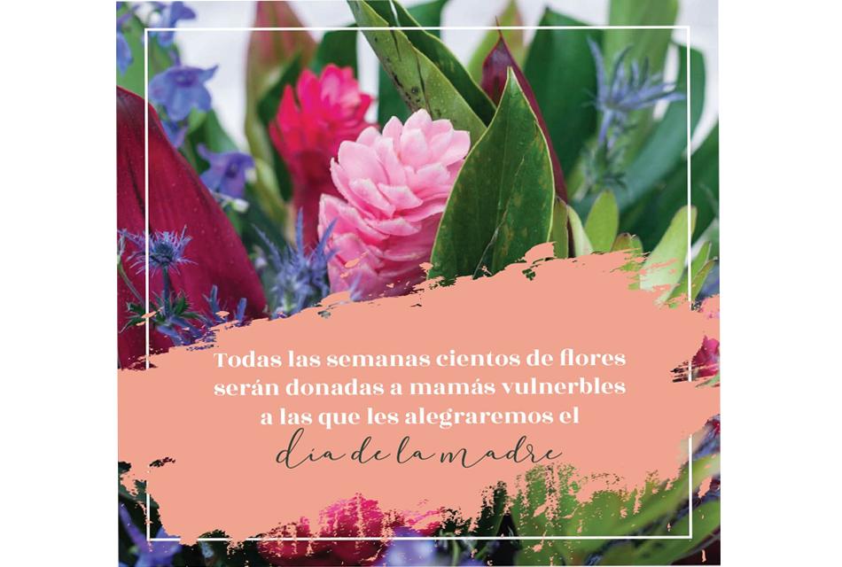 Cientos de flores seran donados semanalmente a madres de familitas vulnerables