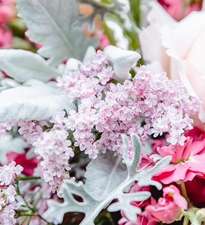 Altaico Silver Pink